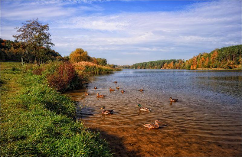 река, осень,утки, Осень на реке Птичъphoto preview