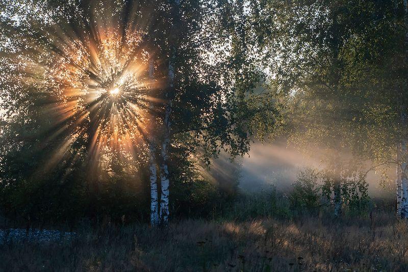 лучи солнца, туман, утро, солнце, берёзы, мещёра рязанская область Лучистый триптих )))photo preview
