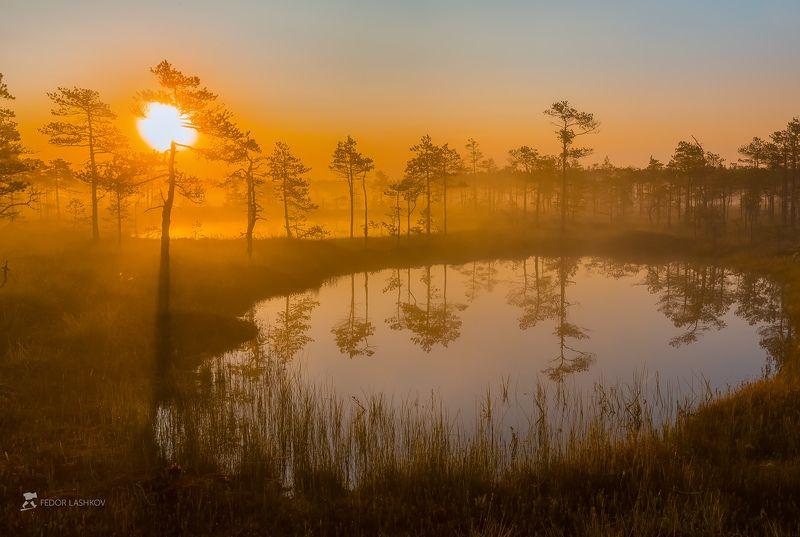 фототур, ленинградская область, деревья, сосна, болото, рассвет, туман, лето, солнце, оранжевый, отражение, озеро Озерцо на рассветеphoto preview