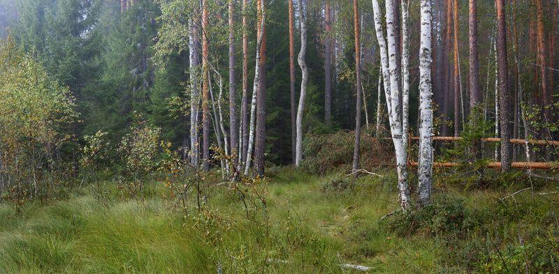 лес опушка туман сентябрь На опушкеphoto preview