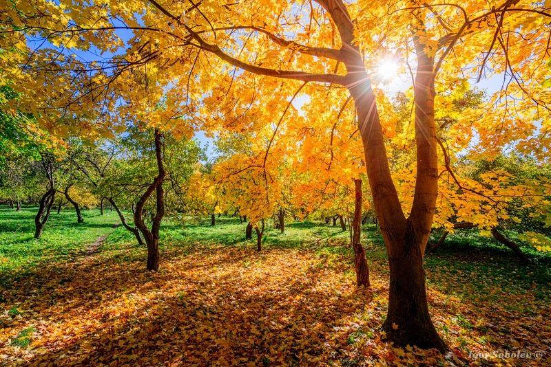 пейзаж, осень, парк, москва Осень в паркеphoto preview
