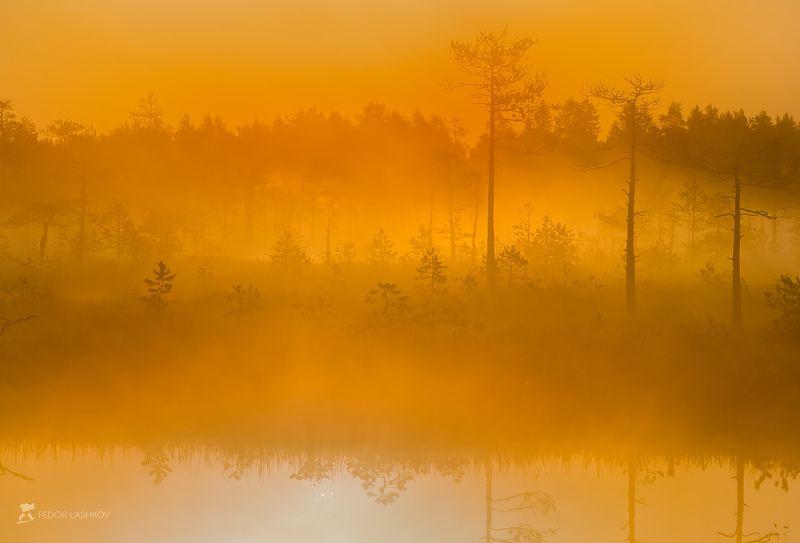 фототур, ленинградская область, деревья, сосна, болото, рассвет, туман, лето, солнце, оранжевый, отражение, озеро Оранжевый туманphoto preview