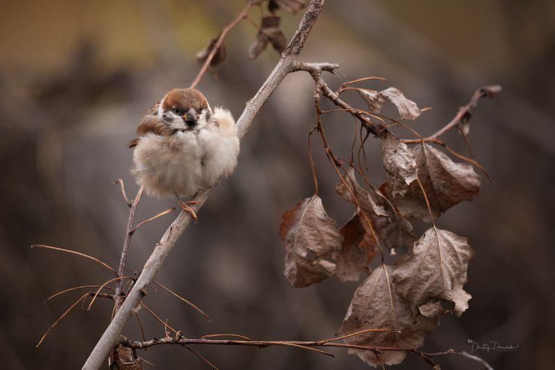 природа, лес, животные, птицы Колобокphoto preview