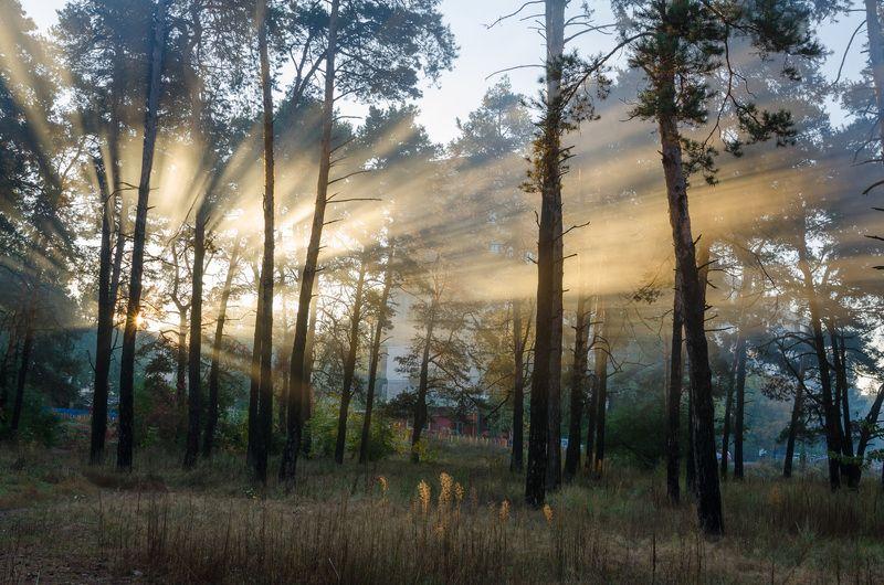 пейзаж, лес, осень, красиво, октябрь, солнце, листья, деревья, лучи, туман Утренние лучиphoto preview