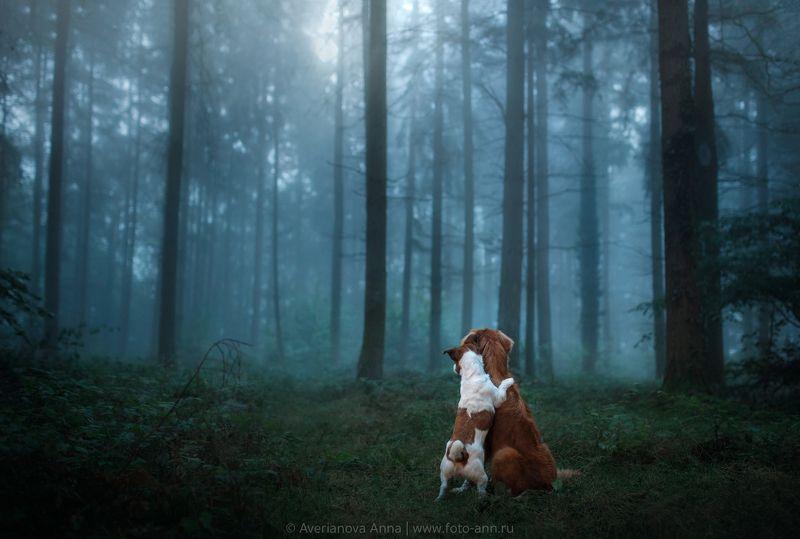 собака, туман, лес Туманphoto preview