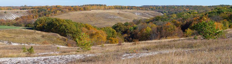 лес,лист,листья,дерево,желтый,ветки,дорога,тропа ***photo preview