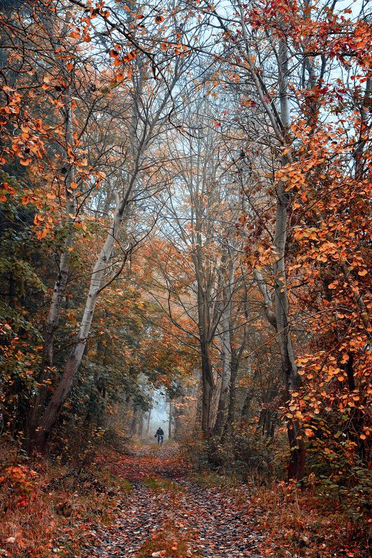 autumn rider trees fall path alley road mist magic jesien cyclist Autumn riderphoto preview