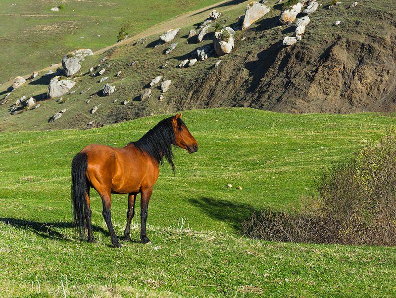 природа, животные, горы, лошади, кавказ, весна, Лошадиphoto preview