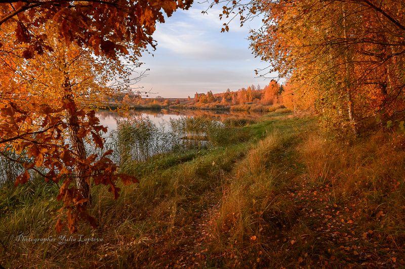 пейзаж,природа,осень,октябрь,россия,,березы,вечер,закат \