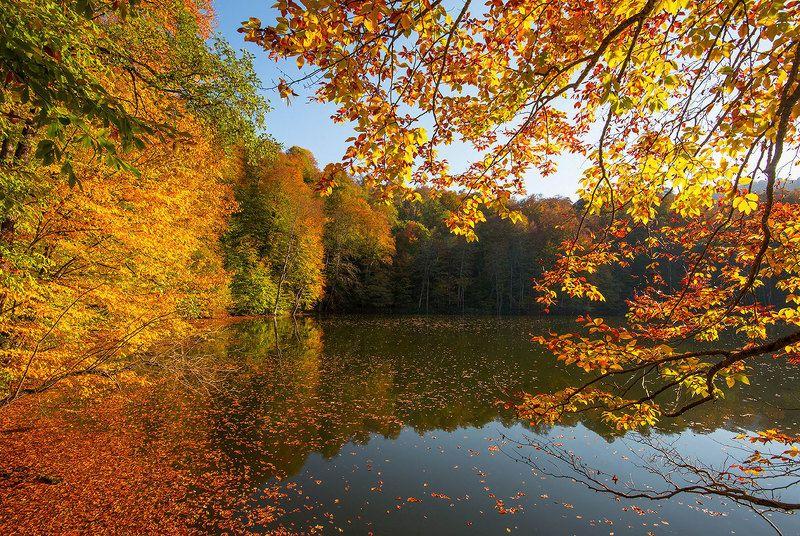 осень Золото осениphoto preview