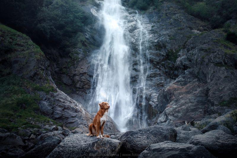 собака, водопад, природа photo preview