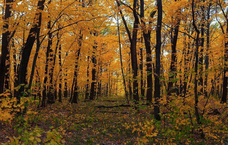 лес,лист,листья,дерево,желтый,ветки,дорога,тропа В желтом нарядеphoto preview