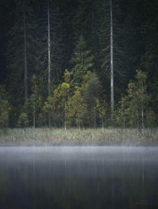ленинградская область, осень, отражения, лес, фактуры, туман Неизвестное озероphoto preview