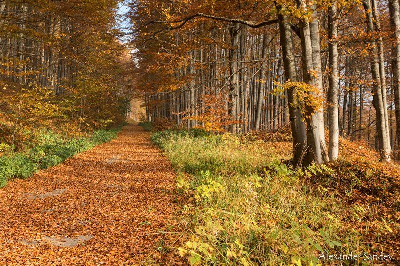 Золотая осень уже пришлаphoto preview