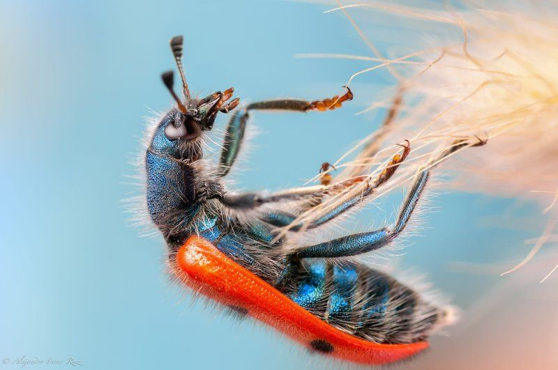 Amazing bugphoto preview