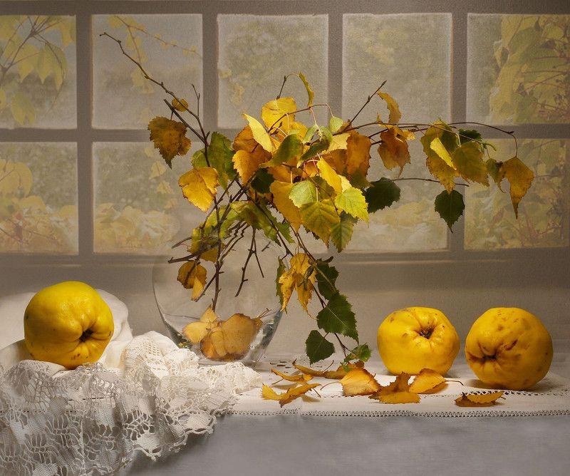 still life,натюрморт,фото натюрморт ,осень ,октябрь ,листья, берёзовые ветки ,айва У природы - \