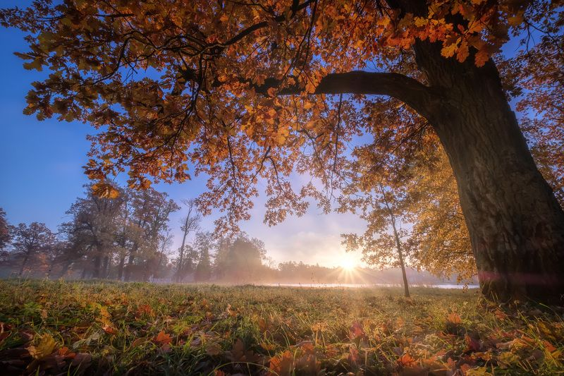 пушкин, царское село, парк, осень, дубы, октябрь, золотая осень, листопад, утро, рассвет Под вековыми дубамиphoto preview