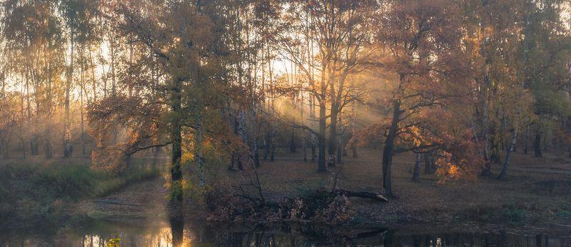 осень, туман, рассвет, пейзаж, landscape, fog Туманное утроphoto preview