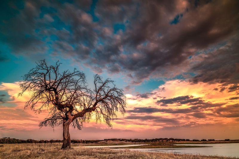 tree,sunset,lake,portugal,travel,lighthunter,lanscape,zeiss,nikond810,felix ostapenko,amazing view tree near the lakephoto preview