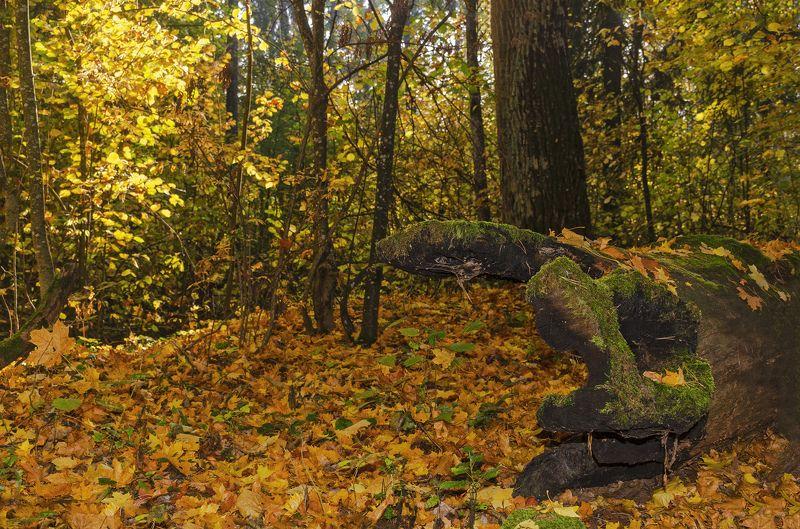 nevant60, пейзаж, красота, лес, осень Осень в лесуphoto preview
