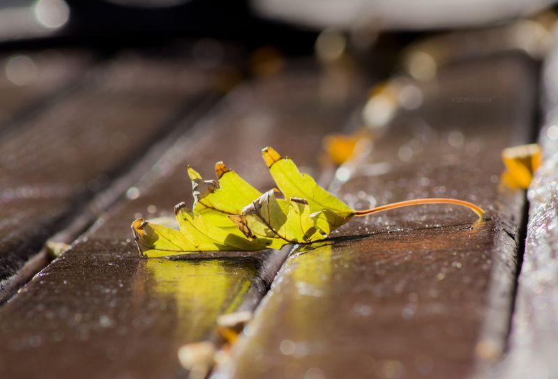 осень, природа Бабье летоphoto preview