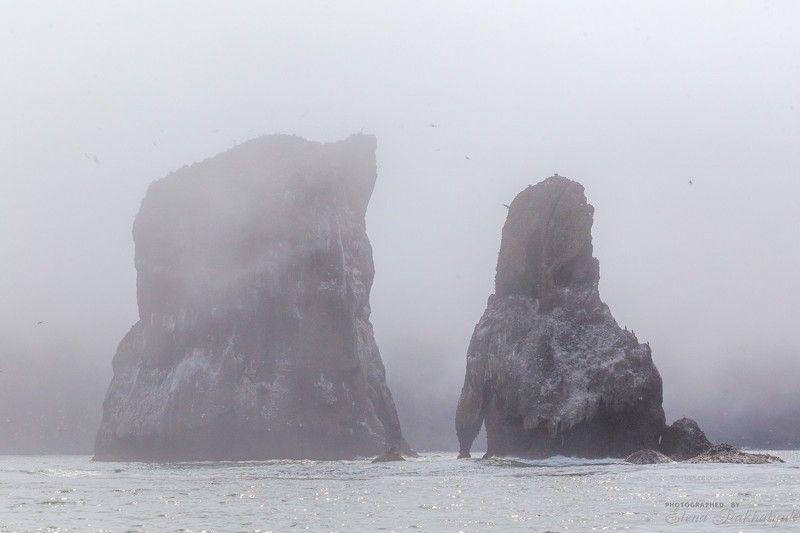камчатка,океан,россия,петропавловск-камчатский,скалы,два брата,туман,день,облака,драматик,путешествие,пейзаж,природа Два Братаphoto preview