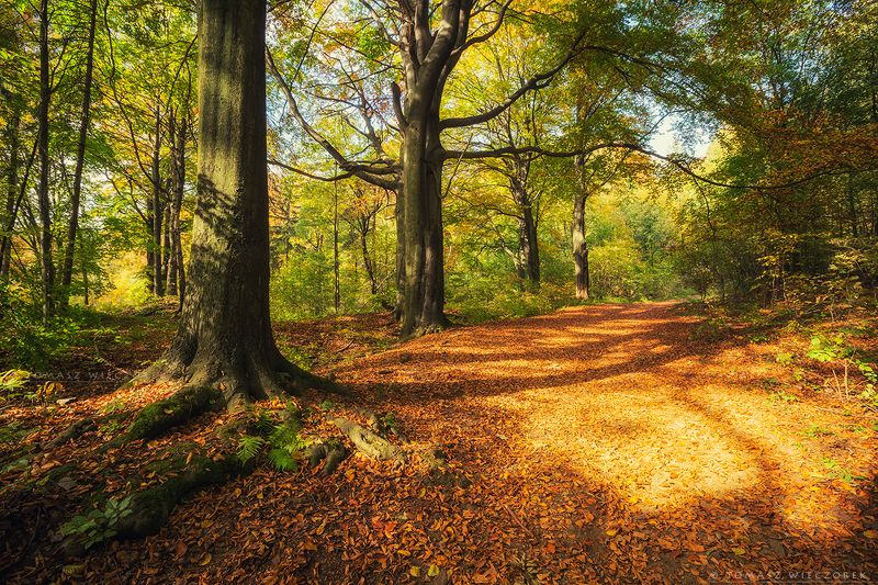 autumn, poland, silesia, forest, colours, brown, yellow, red, green, landscape, beautiful, awesome, amazing, explore Color explosionphoto preview