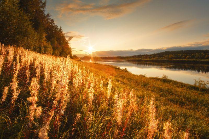 россия, сибирь, иркутская область, нижняя тунгуска, река, природа, пейзаж, закат, иван-чай, осень Сибирское золотоphoto preview