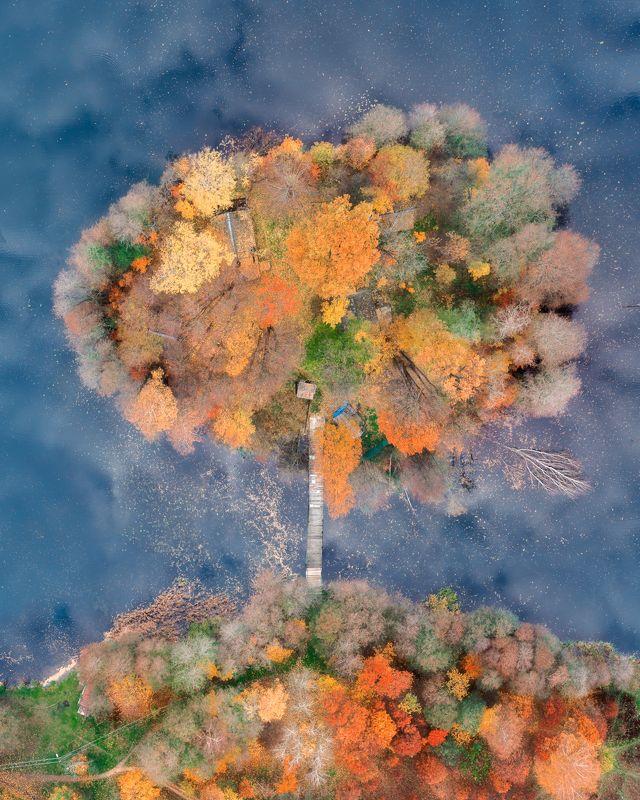Осень, природа, дрон Осеннее деревоphoto preview