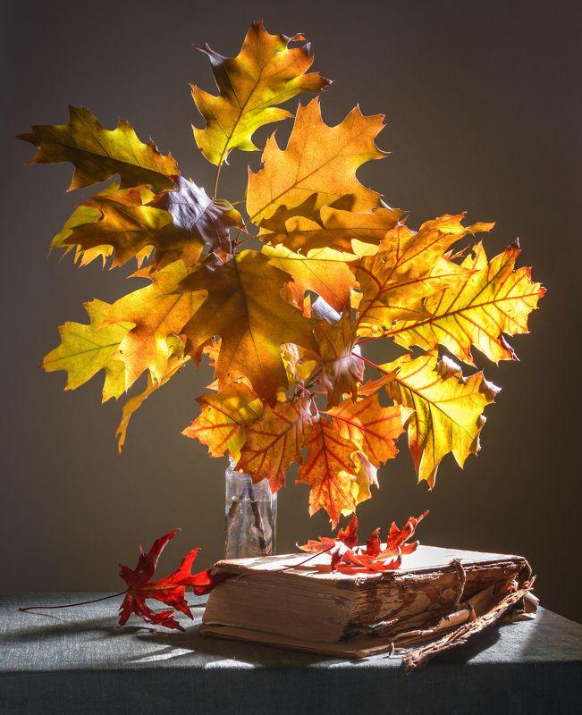 still life, натюрморт,    растение, природа,  винтаж, ретро, букет, осенний букет, осенние листья, книга, свет, солнечный свет осенний натюрмортphoto preview