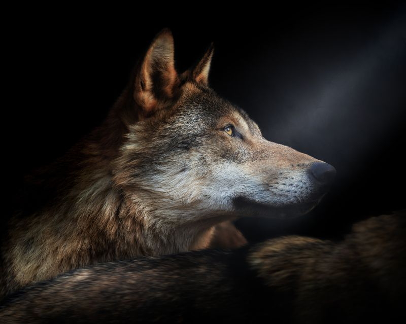 Wolfphoto preview