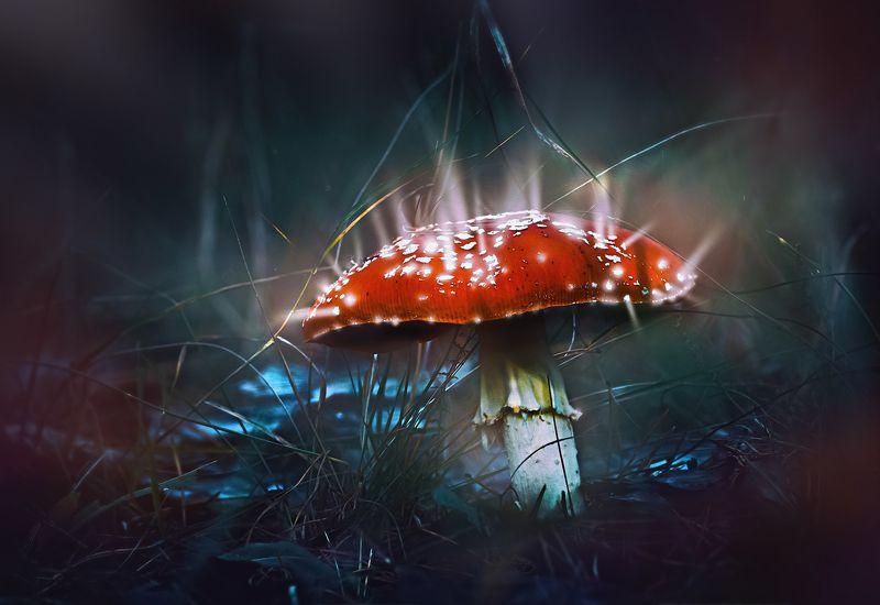 гриб,жук,вода,дождь,хвоя,красный,свет,лес Сказочный мухоморphoto preview