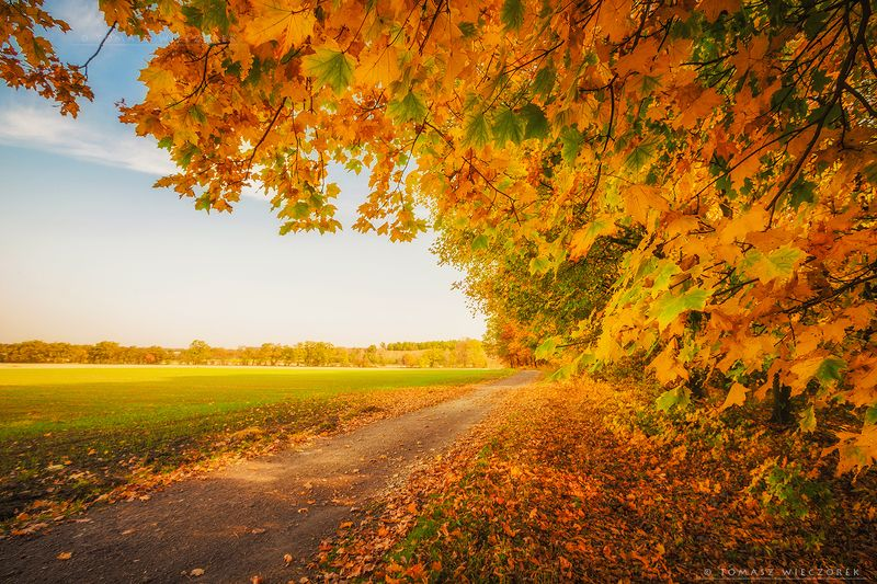 autumn, colours, landscape, explosion, brown, poland, yellow, red, green, yellow, morning, sunrise, sunset, awesome, amazing Autumn morningphoto preview