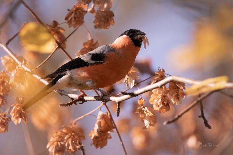 природа, лес, животные, птицы Обжораphoto preview