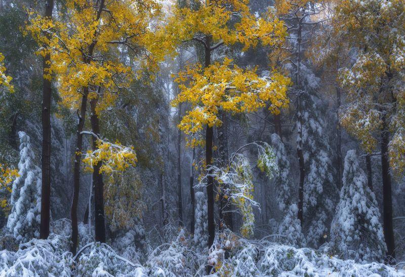 байкал, иркутск Под белым покрывалом сентября.photo preview
