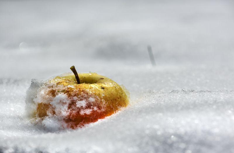 природа, макро, снег, яблоко \