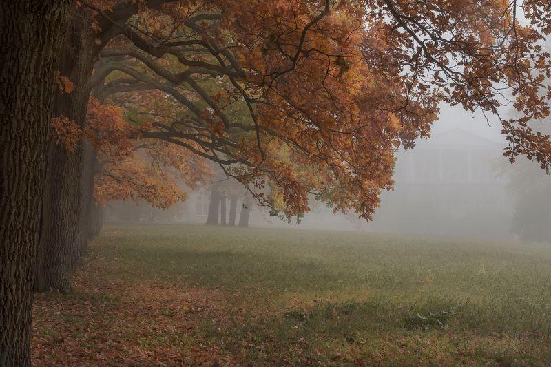 пушкин, царское село, парк, осень, дубы, октябрь, золотая осень, листопад, утро, рассвет Екатерининский парк в осеннем туманеphoto preview