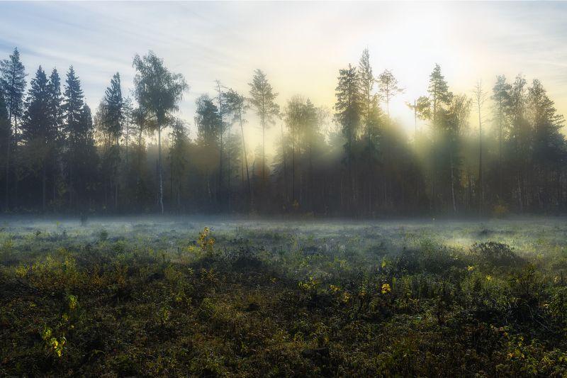 утро, осень, дорога, вырубка \