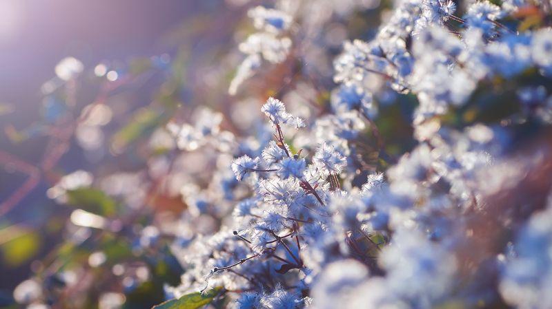 цветы,солнце,лучи,листья,трава,желтый,голубой Фон для рабочего столаphoto preview