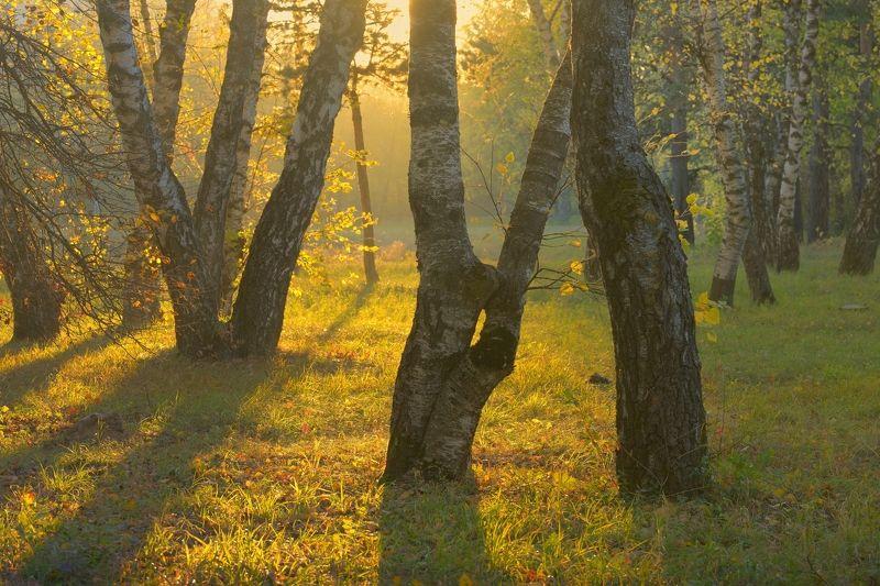 осень рассвет лес листва береза Осеннее утроphoto preview