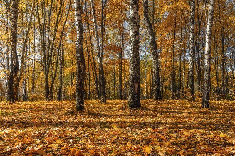 осень, московская область, пейзаж, лес, березы, landscape, подольск Оранжевая странаphoto preview