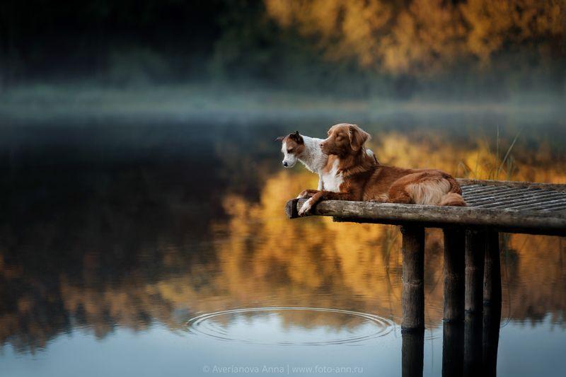 природа, утро, собака утро на озереphoto preview