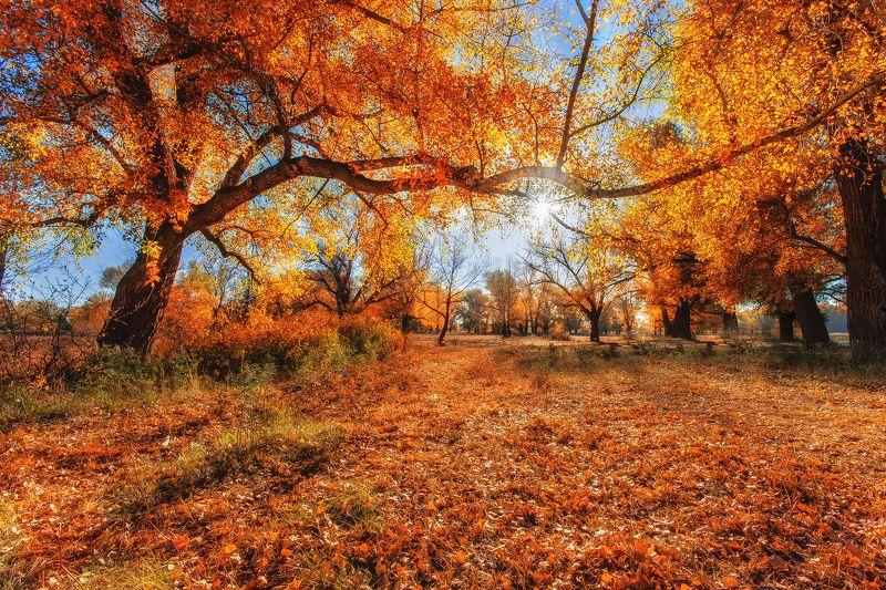Осеннее настроение photo preview