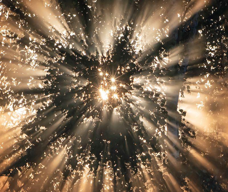 лучи солнца, туман, утро, солнце, берёзы, мещёра рязанская область Pro лучистые мирыphoto preview