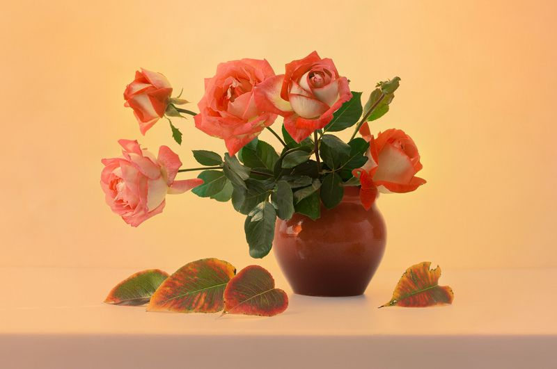 розы октября,,photo preview