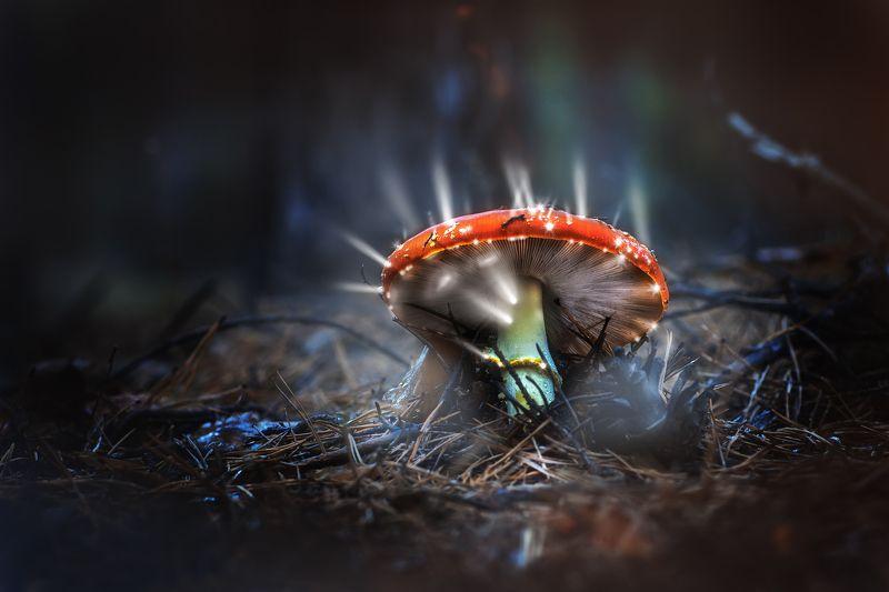 гриб,жук,вода,дождь,хвоя,красный,свет,лес Он точно настоящий?photo preview