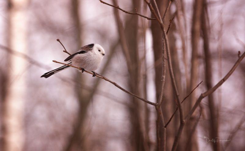 природа, лес, животные, птицы Осеннее утроphoto preview