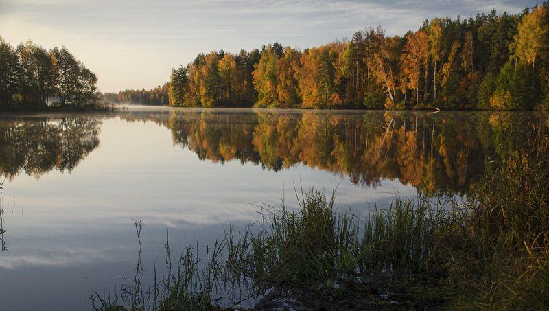nevant60, пейзаж, красота, лес, осень Золотая осеньphoto preview