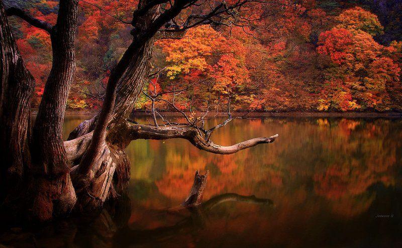Autumn Lakephoto preview