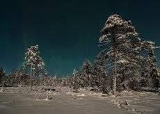Зима в лунном свете.